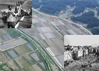 1970년대 : 습지매립을 통한 농경지화